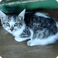 Adopt A Pet :: Bebe - San Antonio, TX