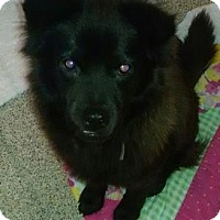 Adopt A Pet :: SEALY - Gloucester, VA