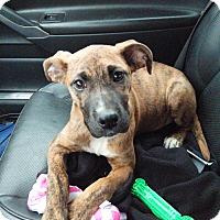 Adopt A Pet :: Nora - Fishkill, NY