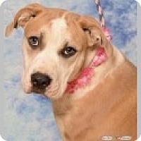 Adopt A Pet :: Iris - Pittsboro, NC