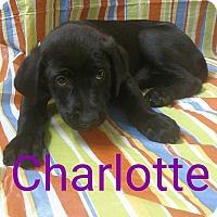 Adopt A Pet :: Charlotte - Garden City, MI