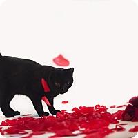Adopt A Pet :: Greg - Jefferson, NC