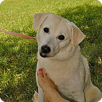 Adopt A Pet :: Libby - TOMBALL, TX