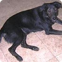 Adopt A Pet :: Rachel - Miami, FL