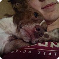 Adopt A Pet :: Rider - Atlanta, GA