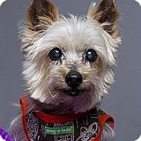 Adopt A Pet :: Spanky - Baton Rouge, LA