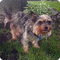 Adopt A Pet :: Mia - Lincolnwood, IL
