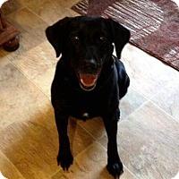 Adopt A Pet :: Hallie - Staunton, VA