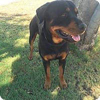 Adopt A Pet :: Zonka - Gilbert, AZ