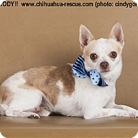 Adopt A Pet :: Cody - Dallas, TX