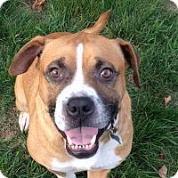 Adopt A Pet :: Wyatt - Portland, ME