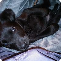 Adopt A Pet :: Miki - San Diego, CA