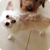 Adopt A Pet :: Jules - Dallas, TX