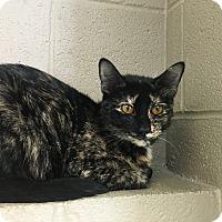 Adopt A Pet :: Morticia - Gadsden, AL