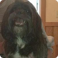 Adopt A Pet :: Hamilton - Homer Glen, IL