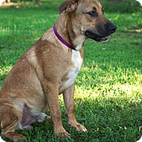 Adopt A Pet :: Brody - Westport, CT