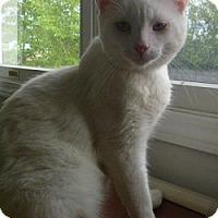 Adopt A Pet :: Jack Frost - Hamburg, NY