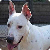 Adopt A Pet :: KAFFIDUL - Atlanta, GA