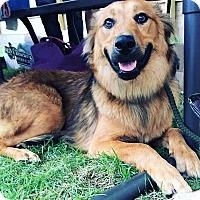 Adopt A Pet :: Delano - Chicago, IL