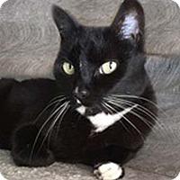 Adopt A Pet :: Mellie - Tiburon, CA