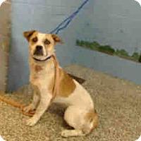 Beagle Mix Dog for adoption in San Bernardino, California - URGENT ON 11/26 San Bernardino