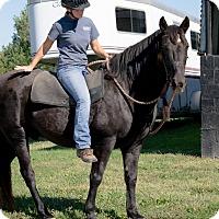 Adopt A Pet :: Smokey - Nicholasville, KY