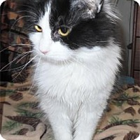 Adopt A Pet :: Sugar - Waupaca, WI