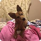 Adopt A Pet :: Amelie ~Bonded: Amara~