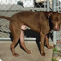 Adopt A Pet :: KING - Oroville, CA