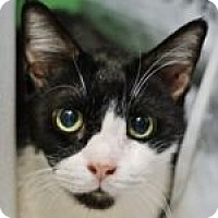 Adopt A Pet :: Charlie and Grand - Medford, MA