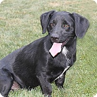 Adopt A Pet :: Blackie - Lewisville, IN
