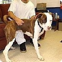 Adopt A Pet :: Zippy - Bloomsburg, PA