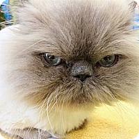Adopt A Pet :: Oscar - Beverly Hills, CA