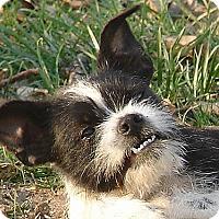 Adopt A Pet :: Dusty - Long Beach, CA