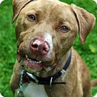 Adopt A Pet :: Dunkin - Tinton Falls, NJ