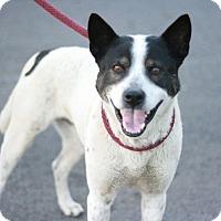 Adopt A Pet :: Felix - Canoga Park, CA