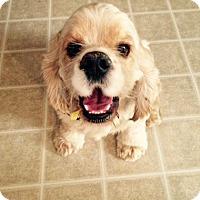 Adopt A Pet :: Marshall - Sacramento, CA