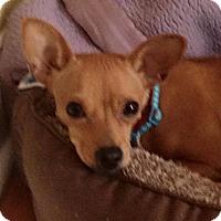 Adopt A Pet :: Pebbles - North Brunswick, NJ