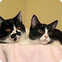 Adopt A Pet :: Smokey and Bandit - Milford, MA