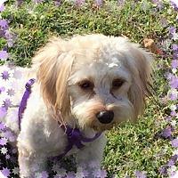 Adopt A Pet :: Adopted!! Annie - TX - Tulsa, OK