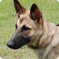 Adopt A Pet :: Elsa-Anne AD 06-16-16 - Preston, CT