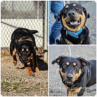 Adopt A Pet :: Vago - Yreka, CA