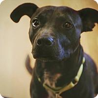 Adopt A Pet :: Rocky - Dallas, TX