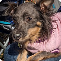 Adopt A Pet :: Bitzy - Loudonville, NY