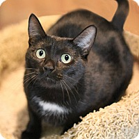 Adopt A Pet :: Madam Hooch - New Prague, MN