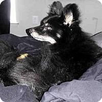 Adopt A Pet :: A406562 - San Antonio, TX