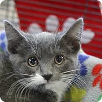 Adopt A Pet :: Nyk - Sarasota, FL