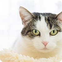 Adopt A Pet :: Moon - Parma, OH