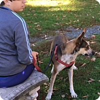 Cattle Dog Mix Dog for adoption in Averill Park, New York - CARLEE