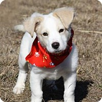 Adopt A Pet :: Bark Twain - Norman, OK